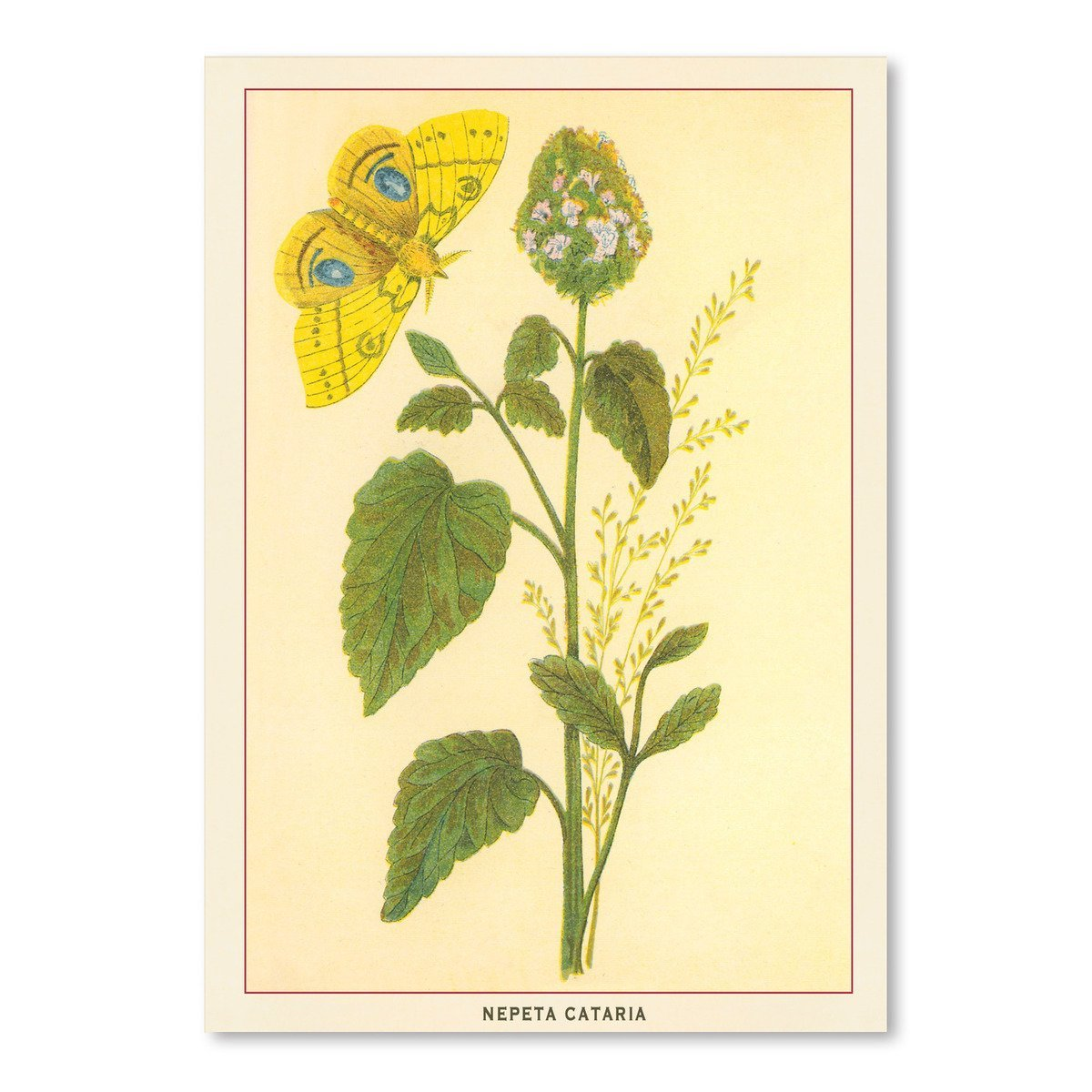 Catnip And Butterfly by Found Image Press Art Print - Art Print - Americanflat