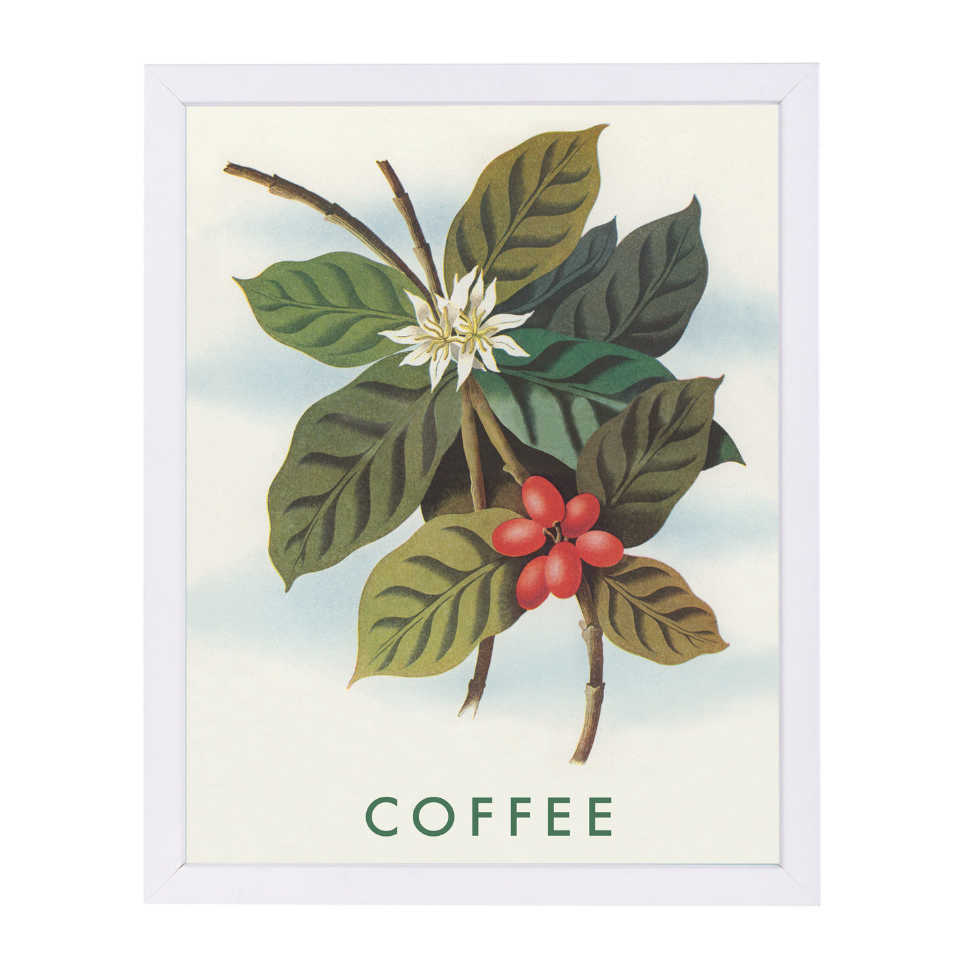 Coffee Plant by Found Image Press Framed Print - Wall Art - Americanflat