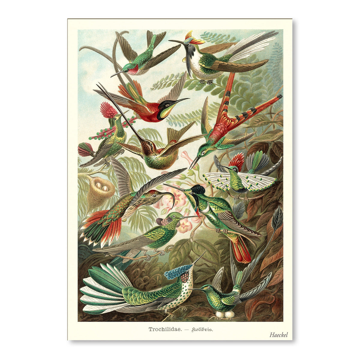 Hummingbirds by Found Image Press Art Print - Art Print - Americanflat