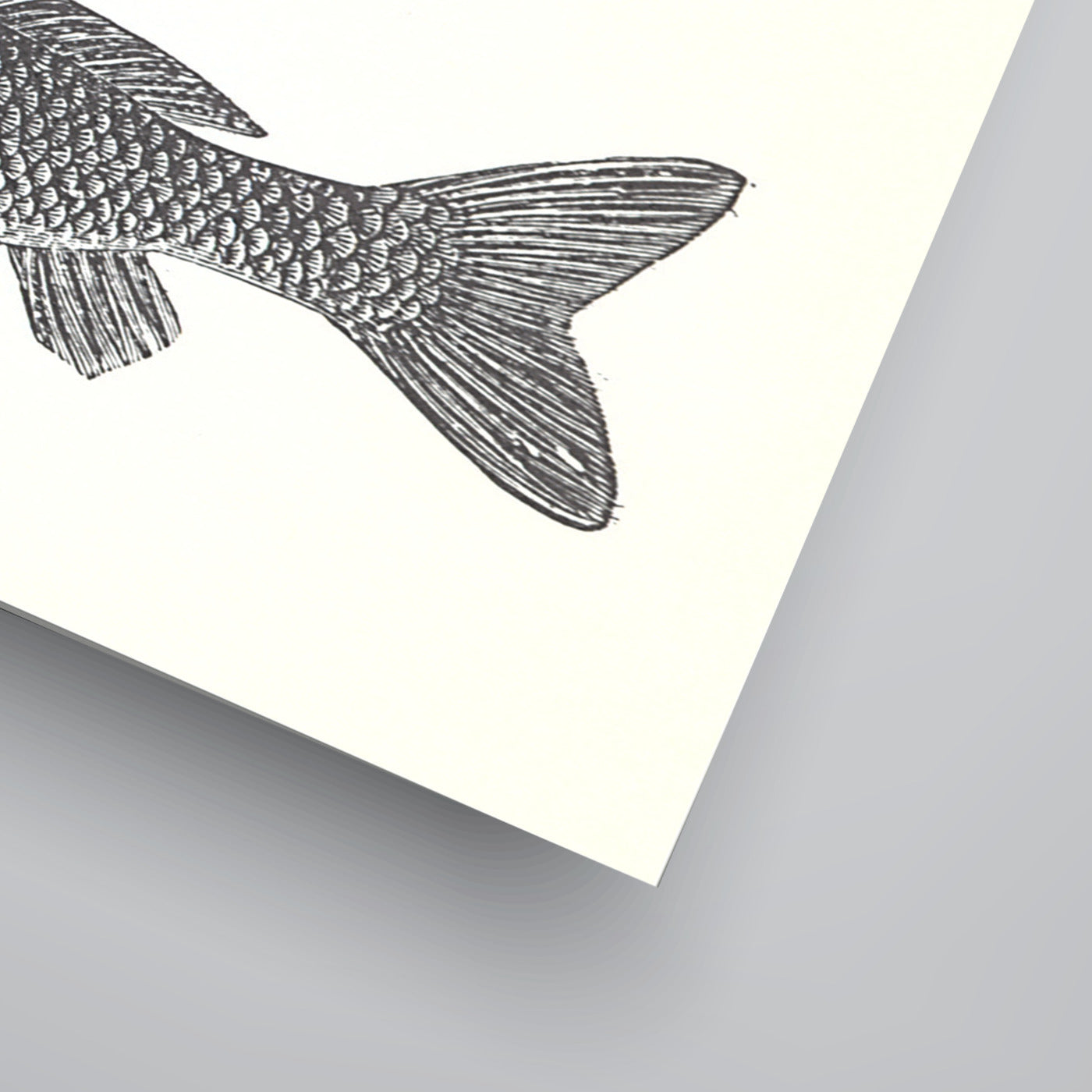 Images Of Fish by Found Image Press Art Print - Art Print - Americanflat