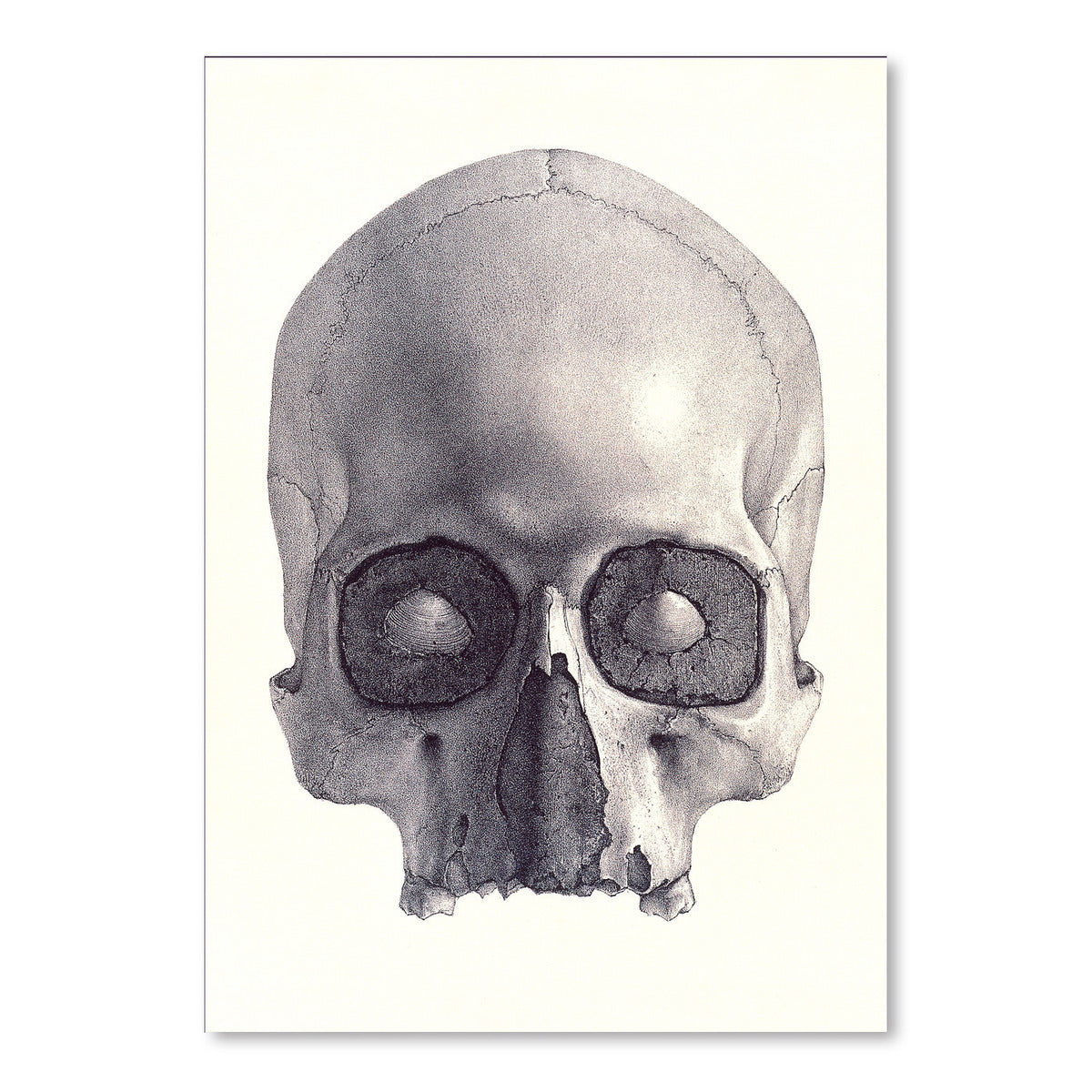 Jawless Skull by Found Image Press Art Print - Art Print - Americanflat
