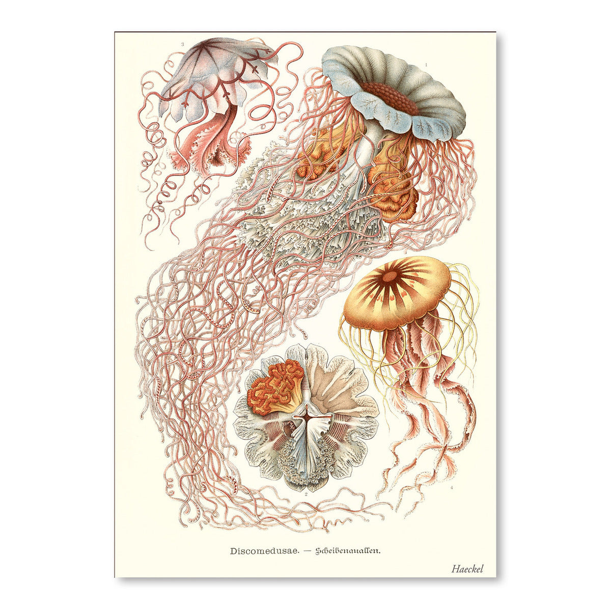 Jellyfish by Found Image Press Art Print - Art Print - Americanflat