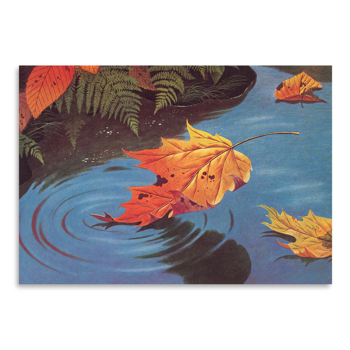 Leaf Falling In Water by Found Image Press Art Print - Art Print - Americanflat