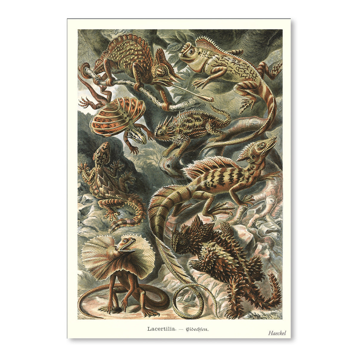Lizards by Found Image Press Art Print - Art Print - Americanflat