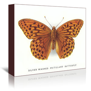 Silver-Washed Fritillary Butterfly by Found Image Press Wrapped Canvas