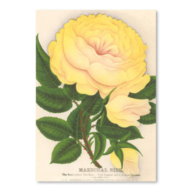 Yellow Tea Rose by Found Image Press Art Print - Art Print - Americanflat