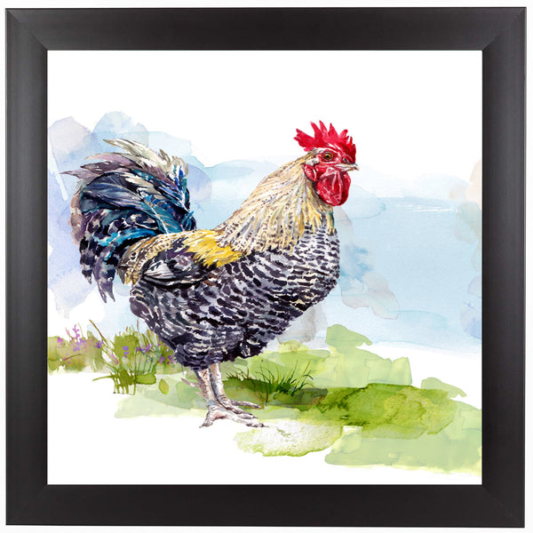 Cockerel 1  by Harrison Ripley Framed Print
