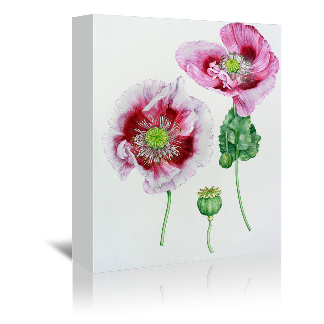 Mauve Poppy by Elizabeth Hellman Wrapped Canvas - Wrapped Canvas - Americanflat