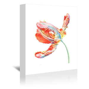 Parrot Tulip by Elizabeth Hellman Wrapped Canvas