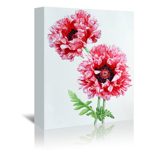 Pink Oriental Poppy by Elizabeth Hellman Wrapped Canvas
