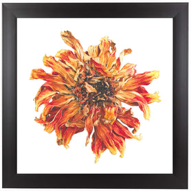 Lion Flower by Elizabeth Hellman Framed Print