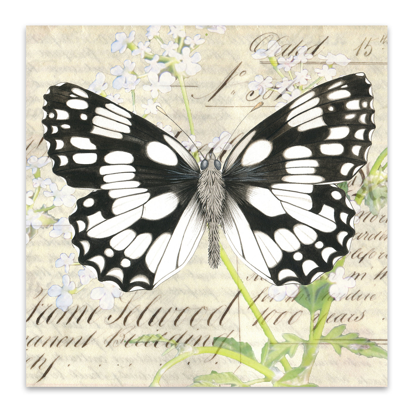 Marbled white Cow Parsley by Elizabeth Hellman Art Print - Art Print - Americanflat