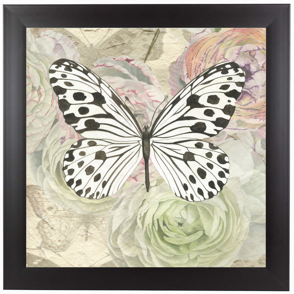 White And Black Butterfly And Ranunculus by Elizabeth Hellman Framed Print