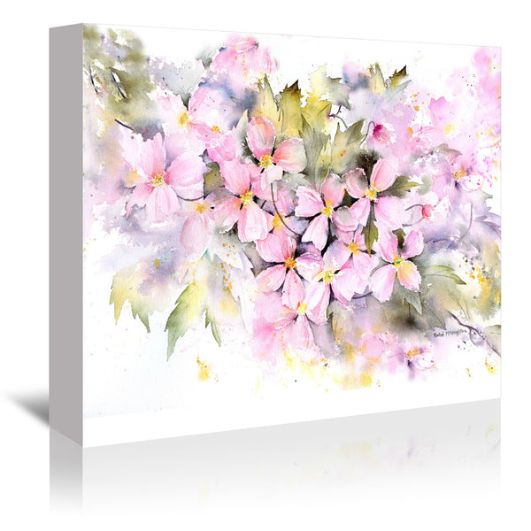 Clematis Montana by Rachel McNaughton Wrapped Canvas