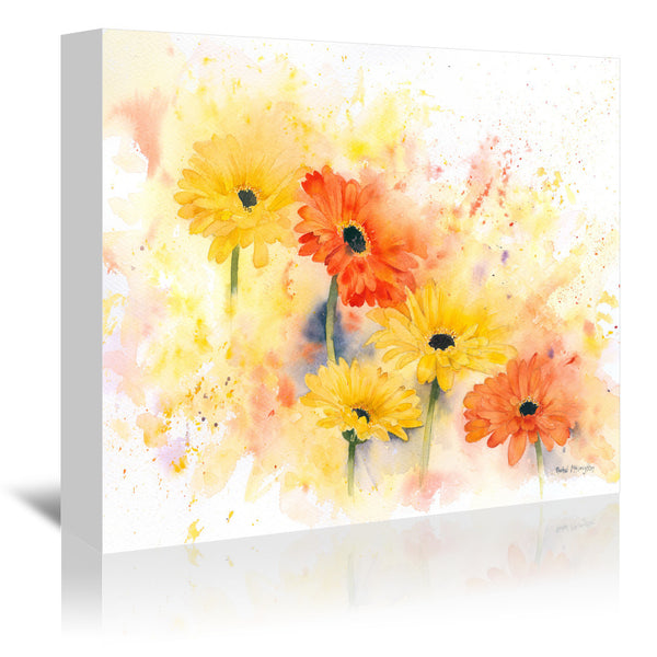Gerbera by Rachel McNaughton Wrapped Canvas