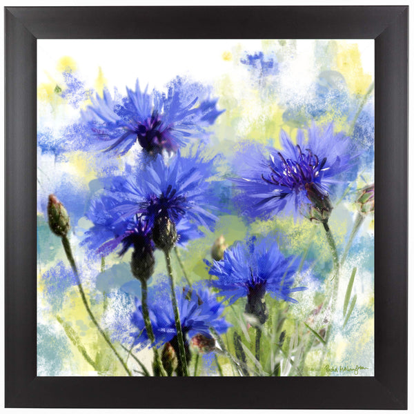 Cornflowers by Rachel McNaughton Framed Print