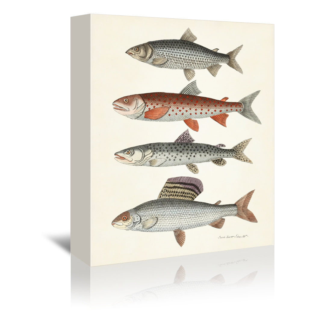 Four fish by Coastal Print & Design Wrapped Canvas - Wrapped Canvas - Americanflat