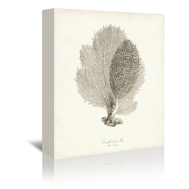 Greige Sea Fan by Coastal Print & Design Wrapped Canvas - Wrapped Canvas - Americanflat