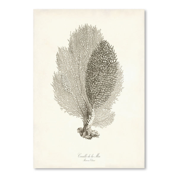 Greige Sea Fan by Coastal Print & Design Art Print