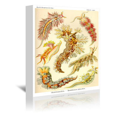 Haeckel Plate 43 by Coastal Print & Design Wrapped Canvas - Wrapped Canvas - Americanflat