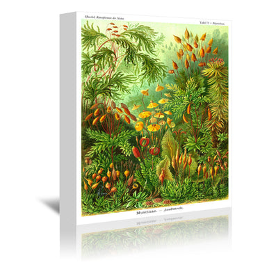 Haeckel Plate 72 by Coastal Print & Design Wrapped Canvas - Wrapped Canvas - Americanflat