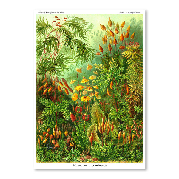 Haeckel Plate 72 by Coastal Print & Design Art Print