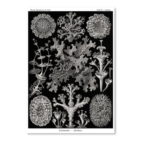 Haeckel Plate 83 by Coastal Print & Design Art Print