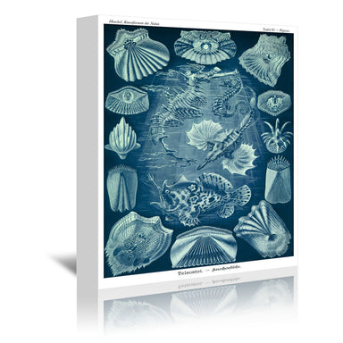 Haeckel Plate 87 by Coastal Print & Design Wrapped Canvas - Wrapped Canvas - Americanflat