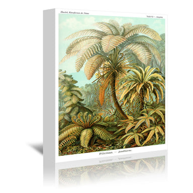 Haeckel Plate 92 by Coastal Print & Design Wrapped Canvas - Wrapped Canvas - Americanflat