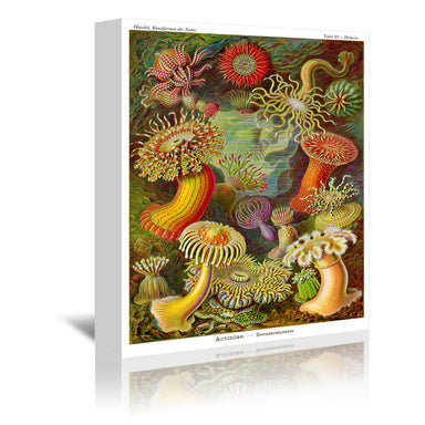 Haeckel Plate 49 by Coastal Print & Design Wrapped Canvas - Wrapped Canvas - Americanflat
