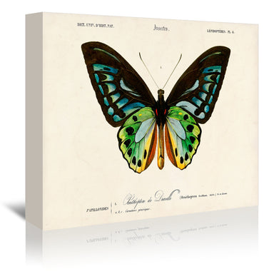 Insects by Coastal Print & Design Wrapped Canvas - Wrapped Canvas - Americanflat