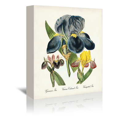 Iris by Coastal Print & Design Wrapped Canvas - Wrapped Canvas - Americanflat