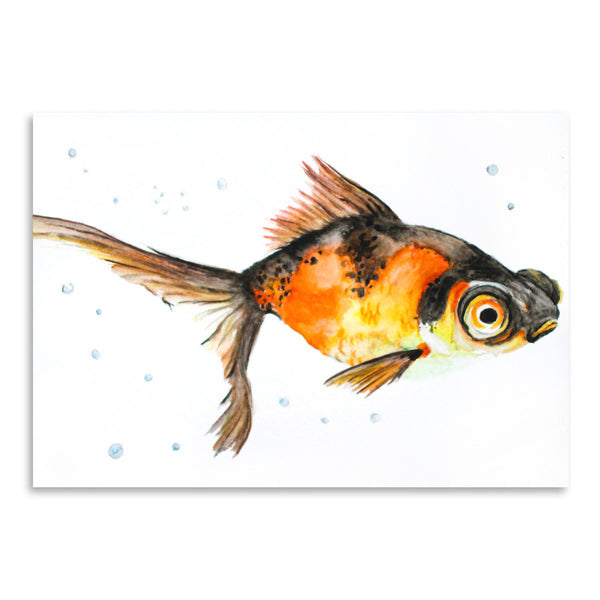 Fancy Goldfish by Allison Gray Art Print