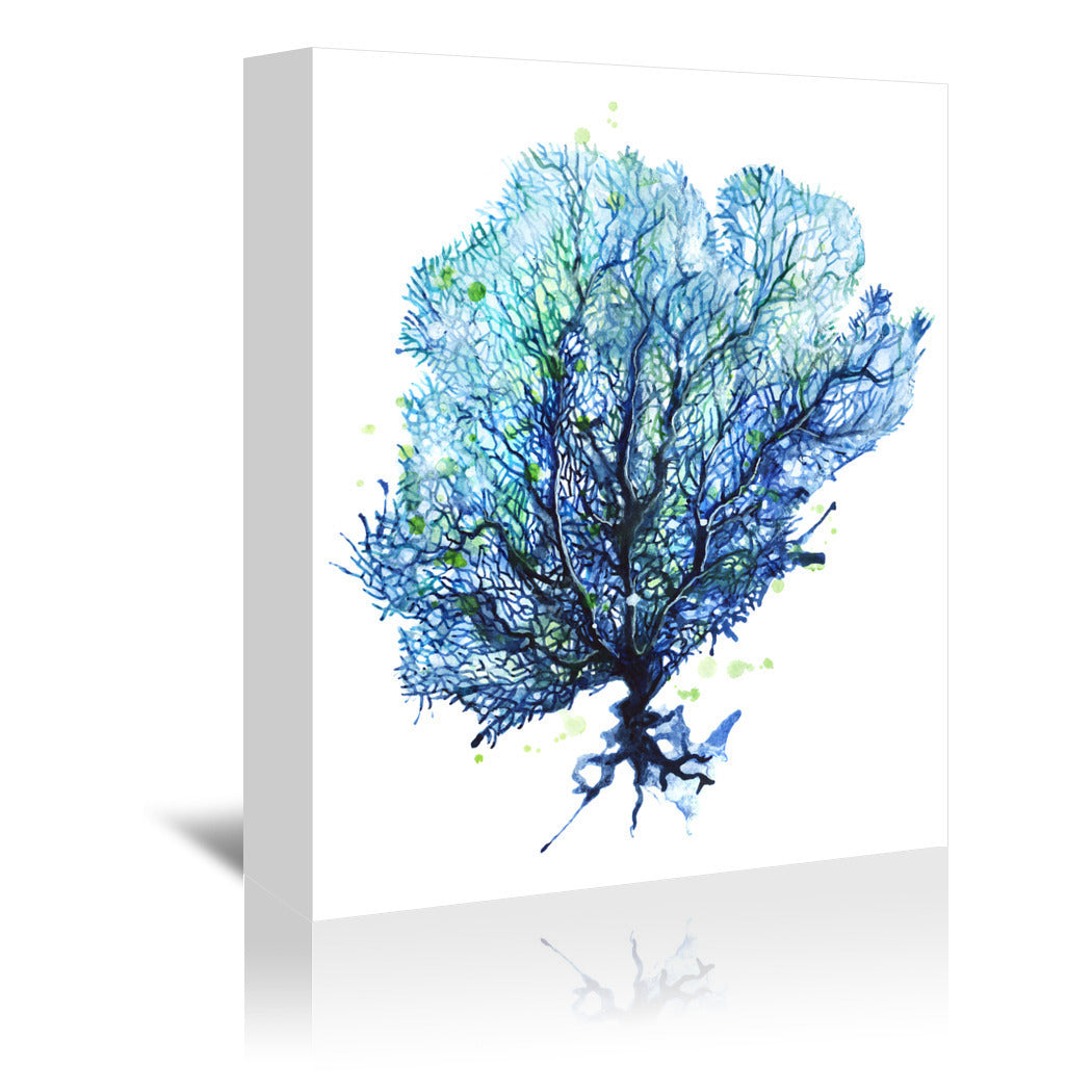 Sea Fan Aqua by Sam Nagel Wrapped Canvas - Wrapped Canvas - Americanflat