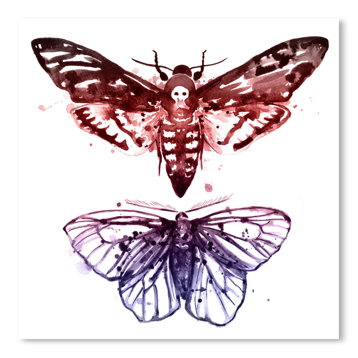 Moths by Sam Nagel Art Print - Art Print - Americanflat