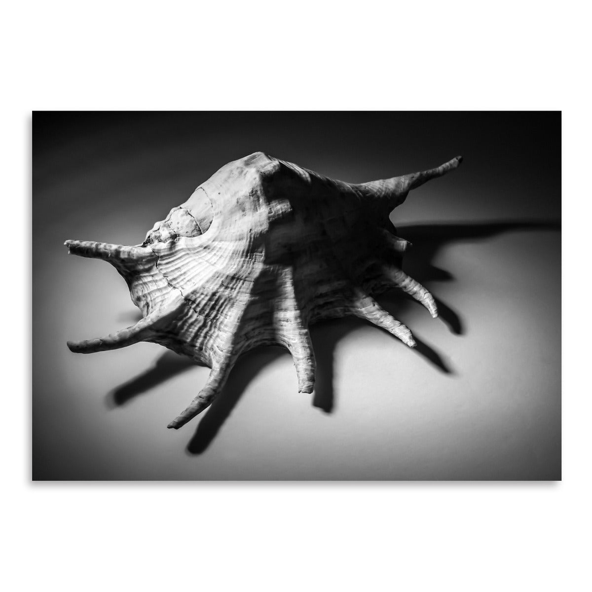 Shell Number 2 by Annie Bailey Art Print - Art Print - Americanflat