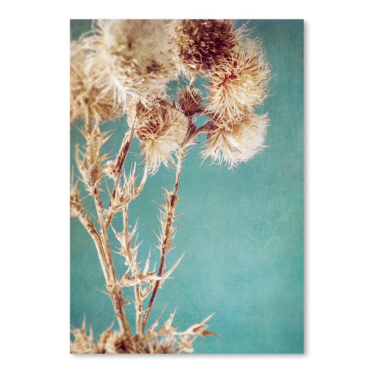 Thistles by Annie Bailey Art Print - Art Print - Americanflat