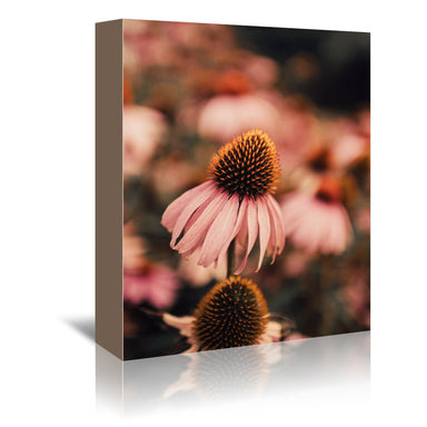 Echinacea by Ingrid Beddoes Wrapped Canvas - Wrapped Canvas - Americanflat