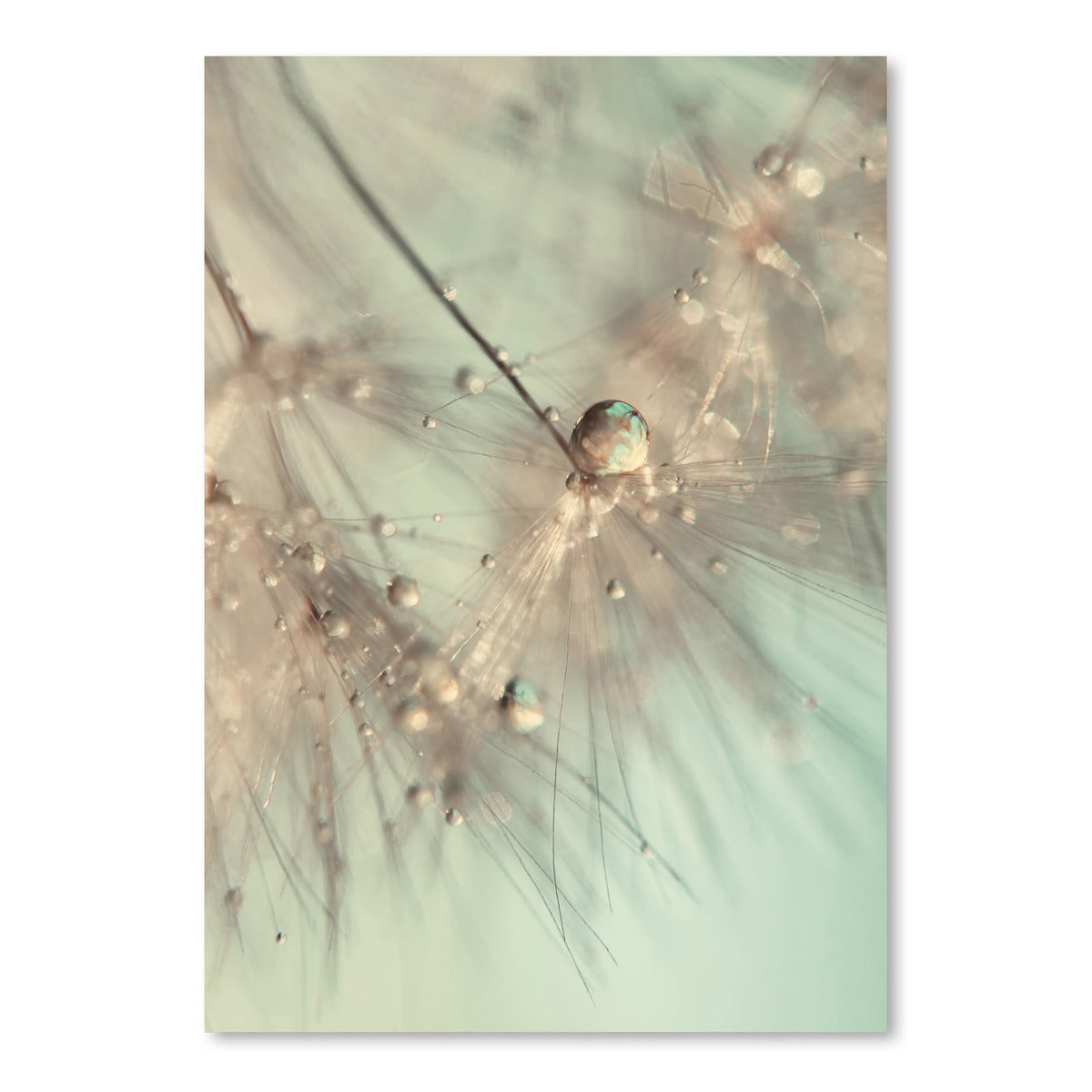 Morning Sparkle by Ingrid Beddoes Art Print - Art Print - Americanflat