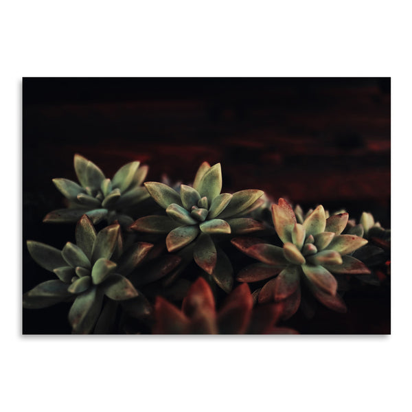 Succulent by Ingrid Beddoes Art Print