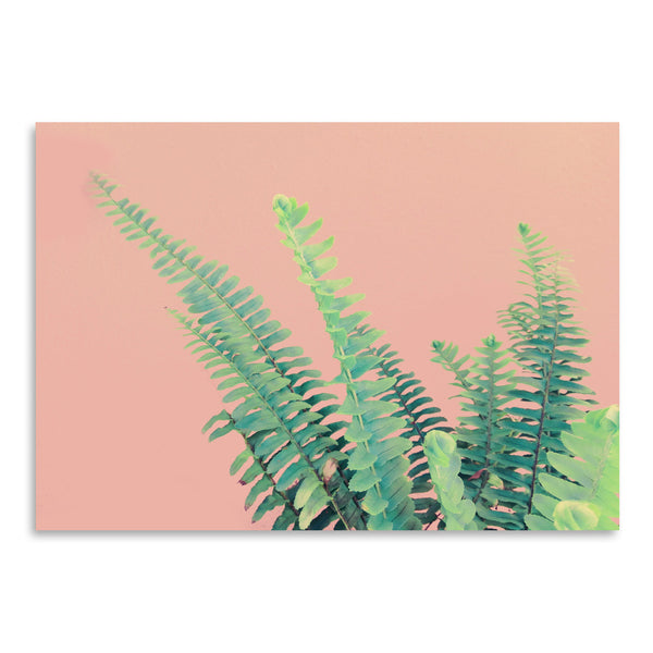 Ferns On Pink by Emanuela Carratoni Art Print