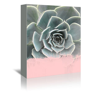 Pink On Succulent by Emanuela Carratoni Wrapped Canvas