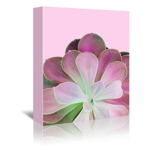 Pink Succulent by Emanuela Carratoni Wrapped Canvas
