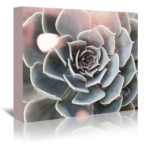 Shiny Succulent by Emanuela Carratoni Wrapped Canvas
