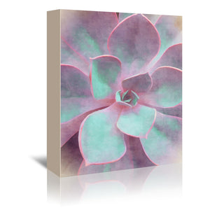 Sweet Succulent by Emanuela Carratoni Wrapped Canvas