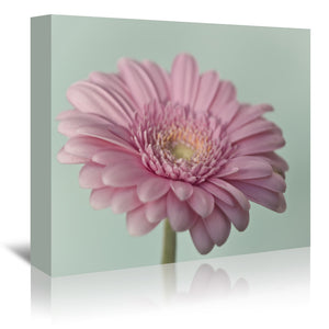 Gerbera 6 by Mirja Paljakka Wrapped Canvas