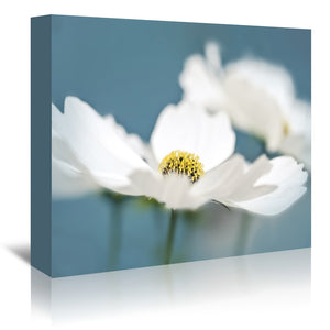 White Cosmos Flowers by Mirja Paljakka Wrapped Canvas