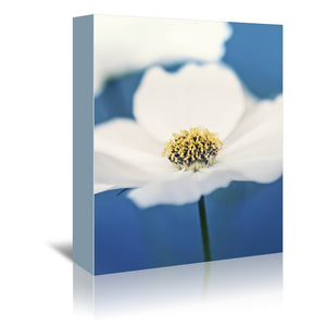 White Cosmos In Blue by Mirja Paljakka Wrapped Canvas
