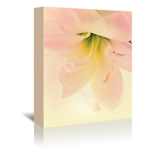 Romantic Amaryllis Close Up by Mirja Paljakka Wrapped Canvas
