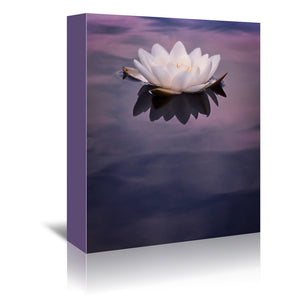 Water Lily On Dark Water by Mirja Paljakka Wrapped Canvas
